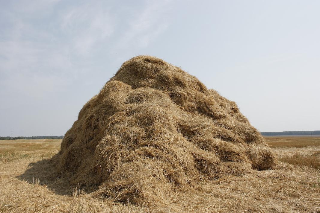 Large pile of loose hay - no bales
